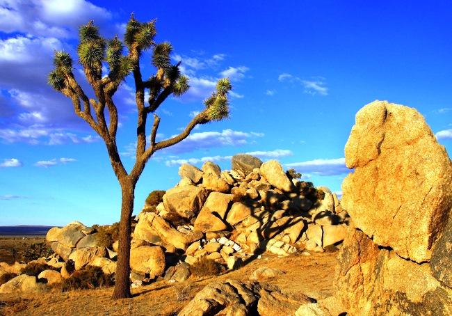Отдых в пустыне – парк Джошуа-Три в Калифорнии