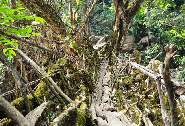 Мосты которые сооружает сама природа 3