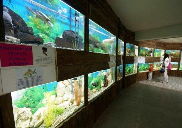 Алуштинский акваиум фото мира прозрачной воды 2