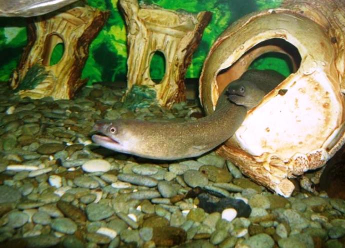 Алуштинский акваиум фото мира прозрачной воды 3