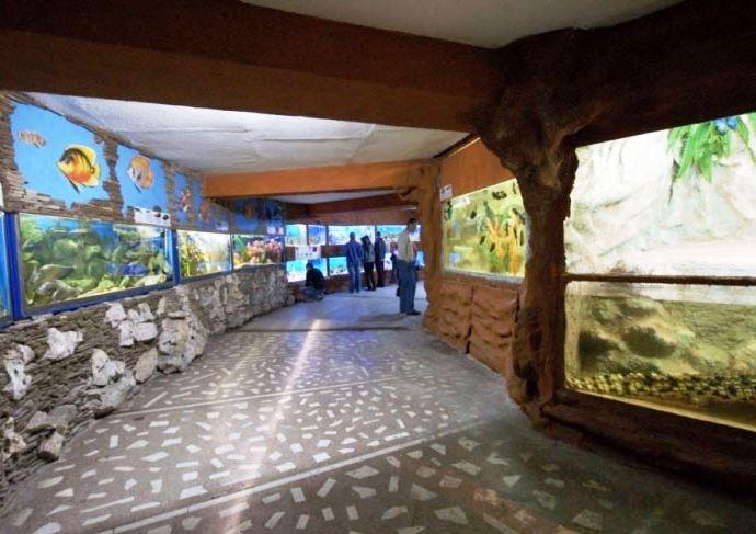Алуштинский акваиум фото мира прозрачной воды 4