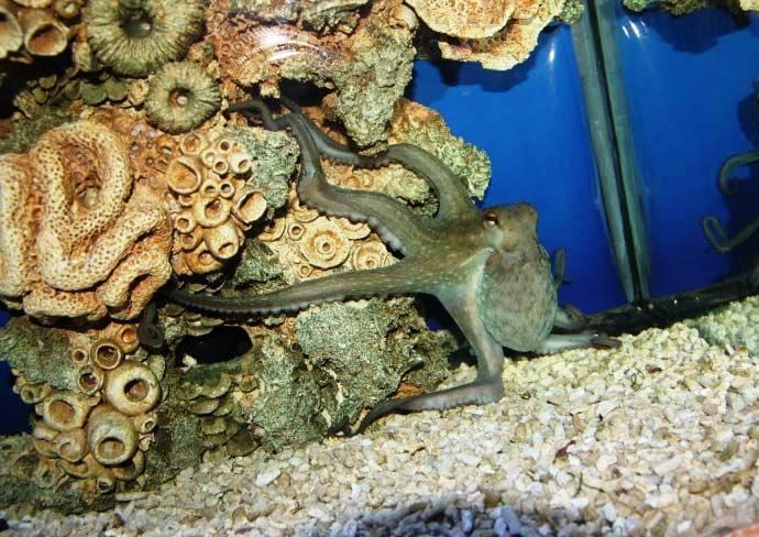 Алуштинский акваиум фото мира прозрачной воды 5