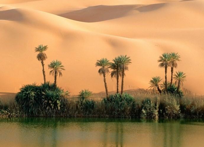 Оазис в пустыне 4