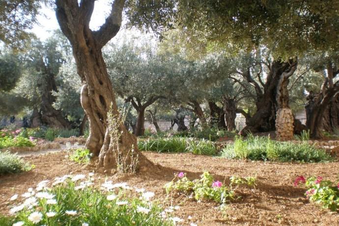 Гефсиманский сад 2