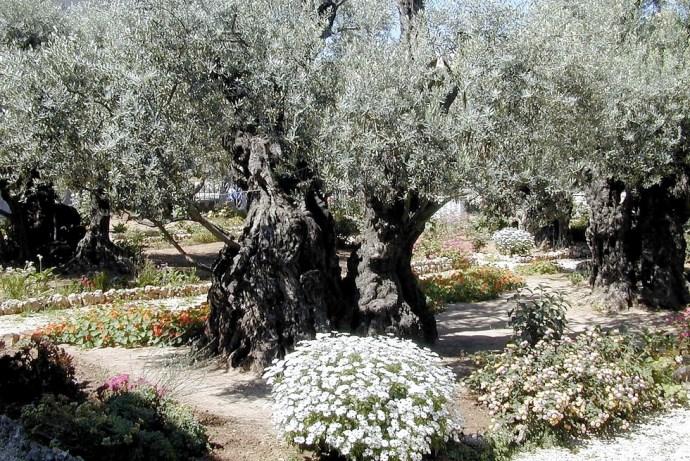 Гефсиманский сад 3