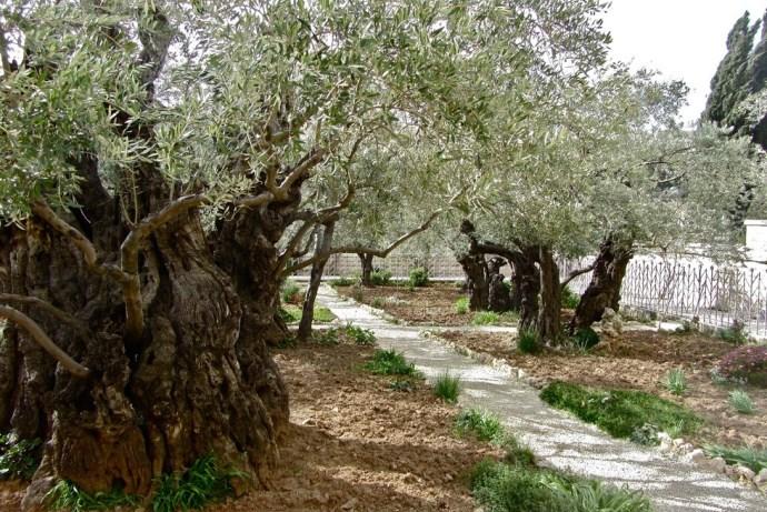 Гефсиманский сад 4