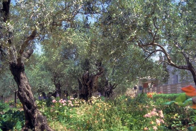 Гефсиманский сад 5