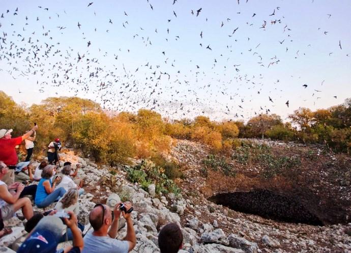 Мир туризма и путешествий пещера Brackeb Bat Cave 2