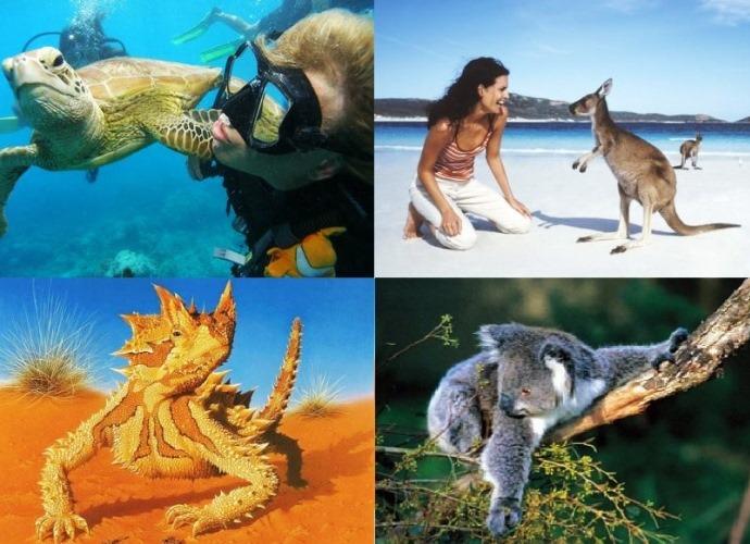 Удивительный отдых в Австралии 4