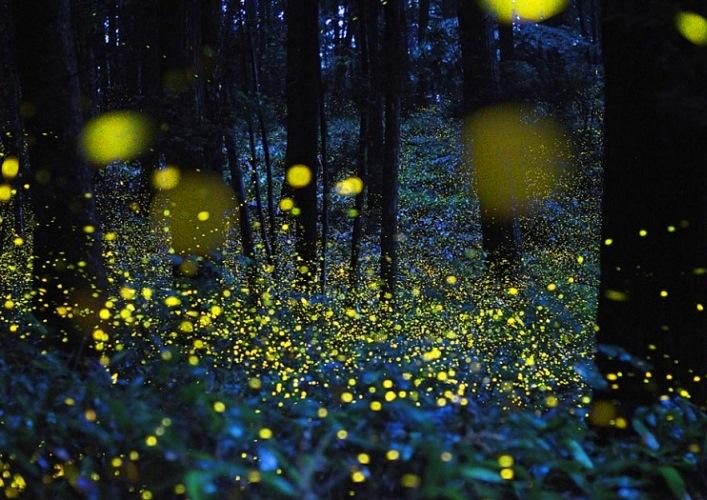 Фантастический мир светлячков