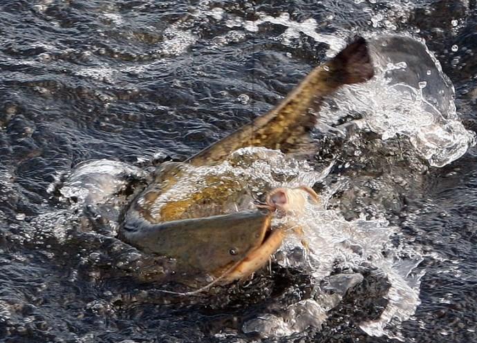 Путешествие и рыбалка в Астрахани 2