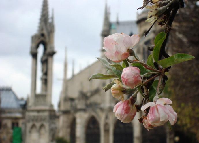 Ранняя весна в Вене и Праге 5