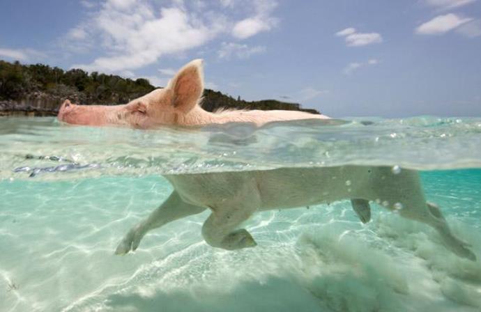 Багамские острова 3
