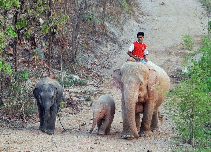 Розовые слоны 3