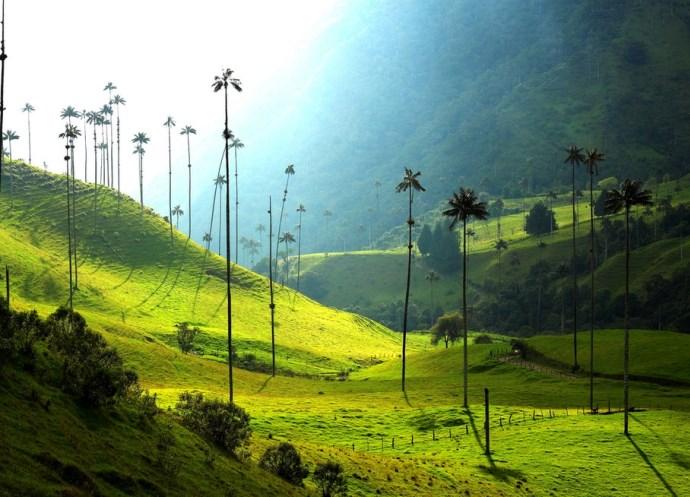Самые высокие деревья 2