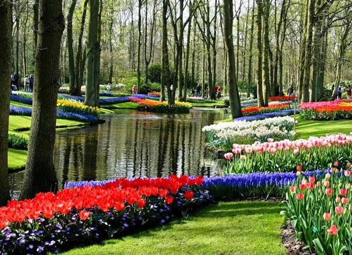 Путешествие в мир цветов Амстердама 2