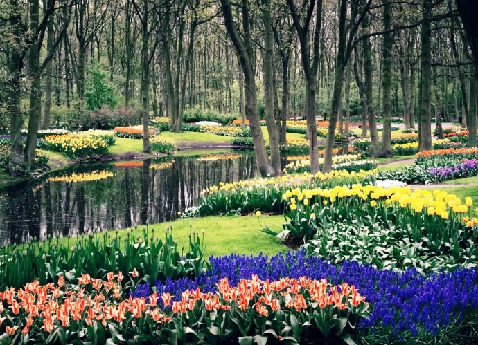 Путешествие в мир цветов Амстердама 3