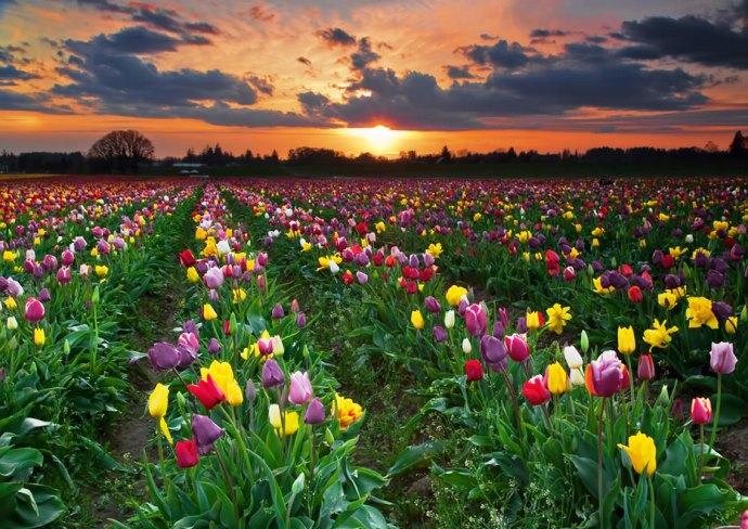 Путешествие в мир цветов Амстердама 5