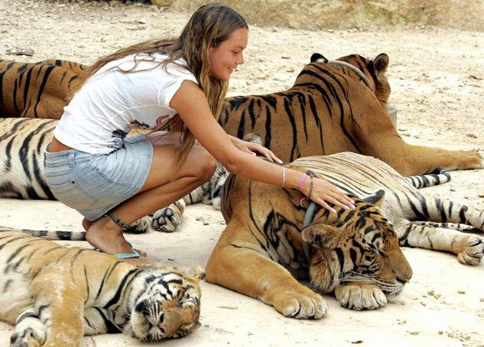 Куда поехать отдыхать Тигриный монастырь в Таиланде 2