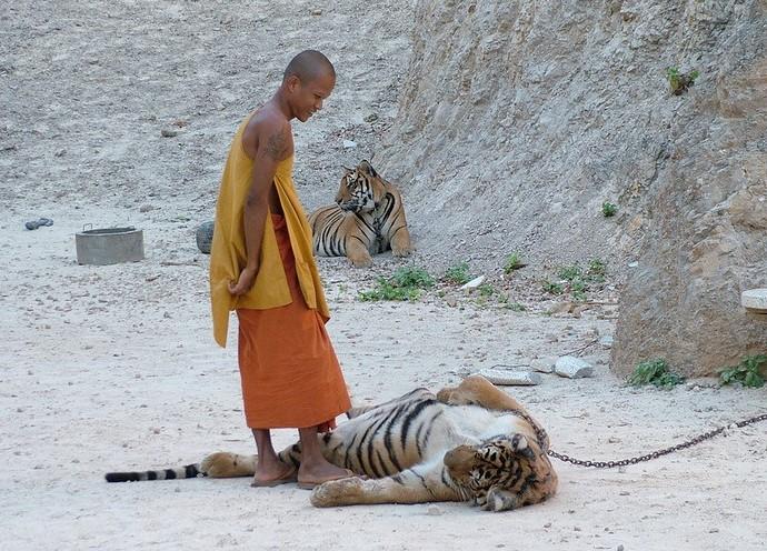 Куда поехать отдыхать Тигриный монастырь в Таиланде 3