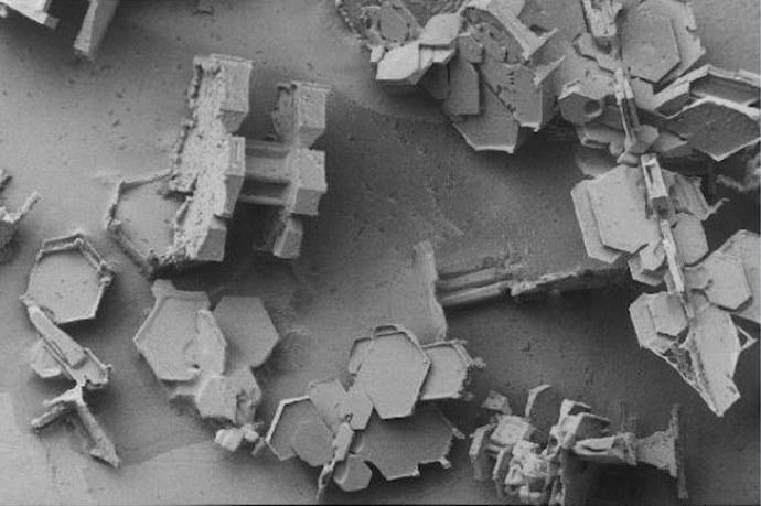 Путешествие с микроскопом в микро мир 5