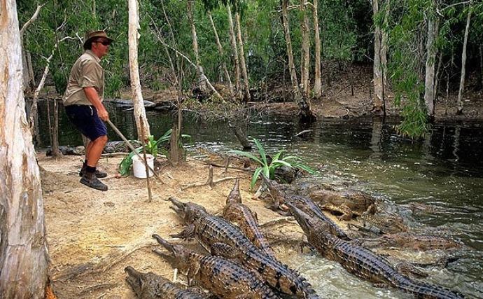 Достопримечательности Африки и Австралии или сафари с крокодилами 2