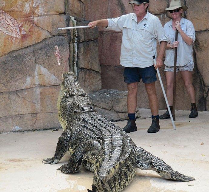 Достопримечательности Африки и Австралии или сафари с крокодилами 4