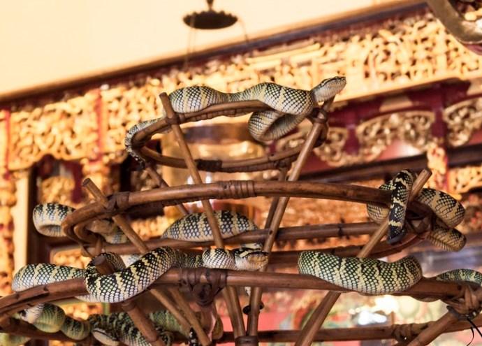 Чарующая Азия Змеиный храм Сунгай Клуанге 4