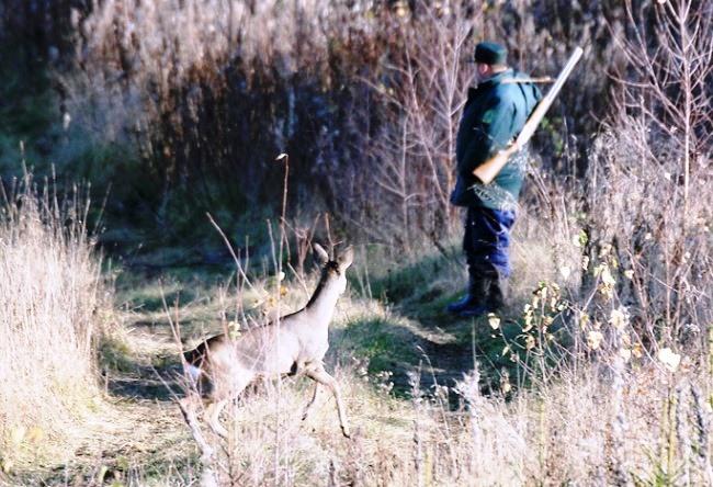 Охота на косулю в Белоруссии 2