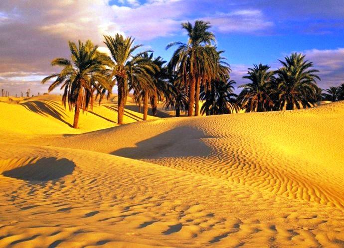 Фото Туниса 4