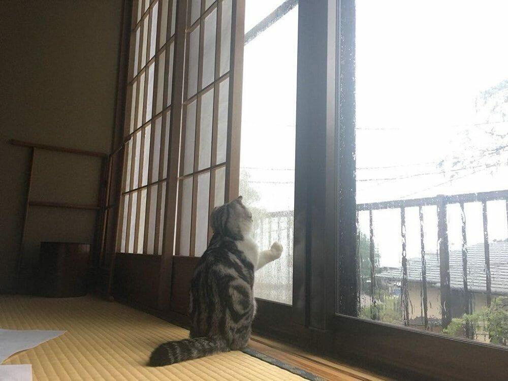 Кот в рекане