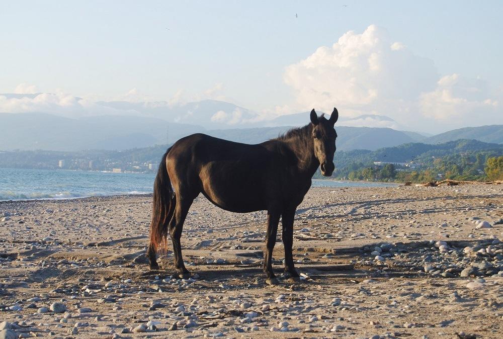 Абхазия в августе