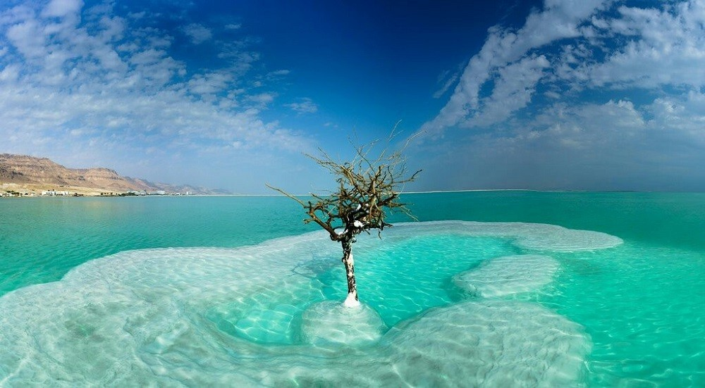 Дерево в море