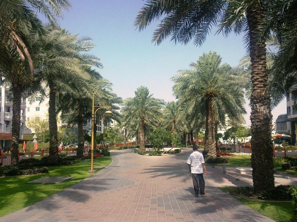 Дубай пальмы