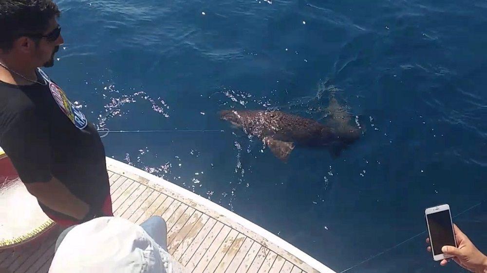 Есть ли в Турции акулы?