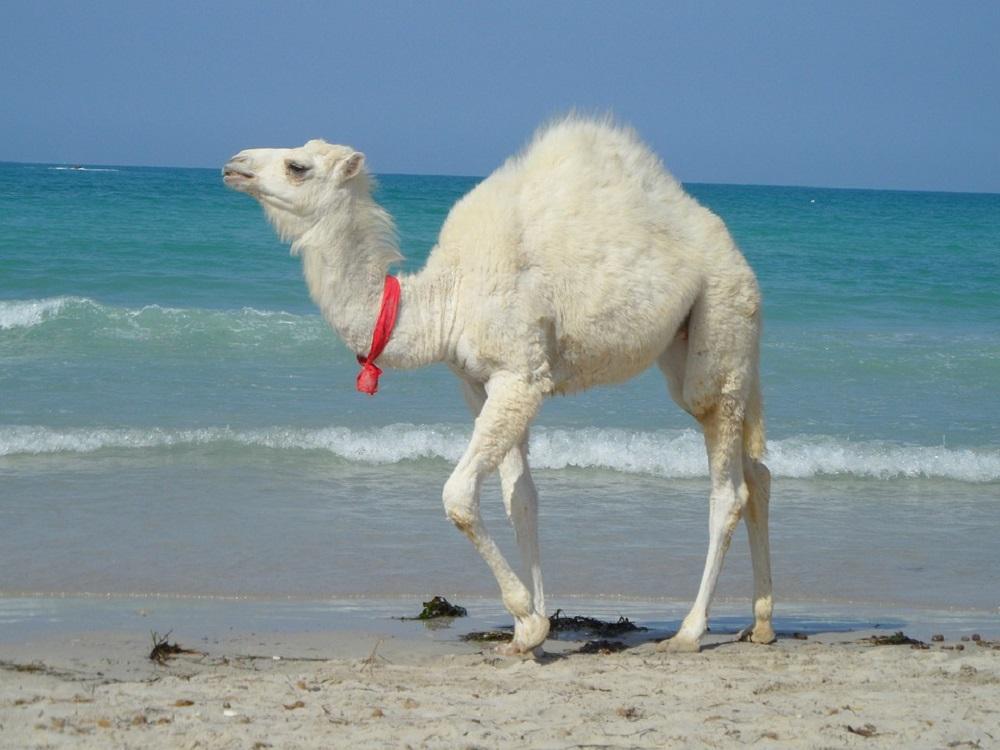 чем может удивить Тунис