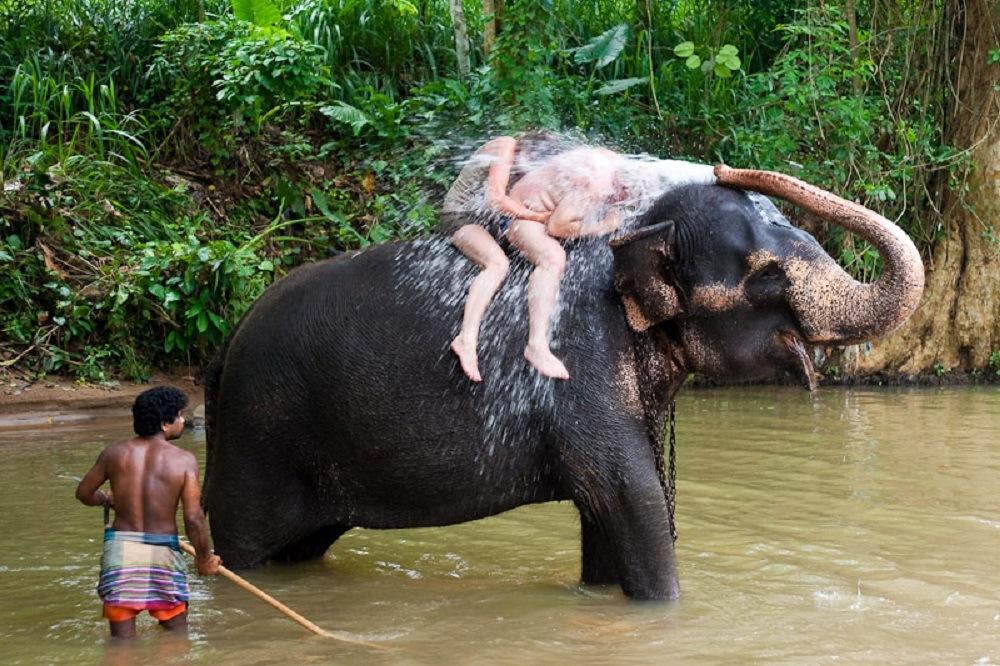 Слоны Шри-Ланка