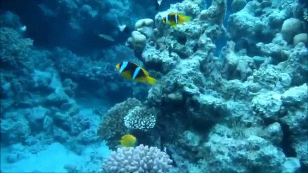 Тематический парк под водой