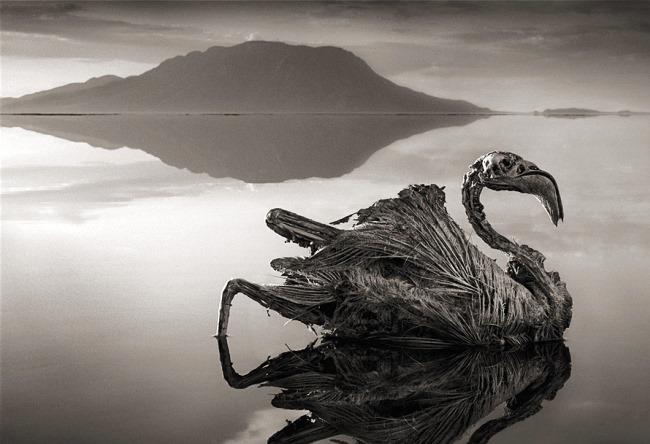 Красное озеро Натрон из семейства Гаргоны 3