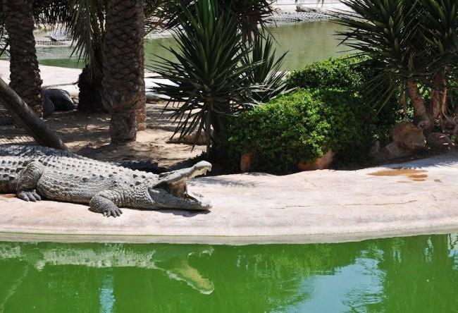 Крокодилий рай острова Джарба 2