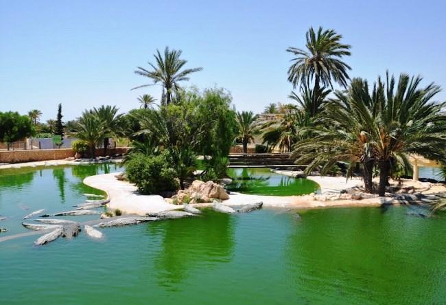 Крокодилий рай острова Джарба 4