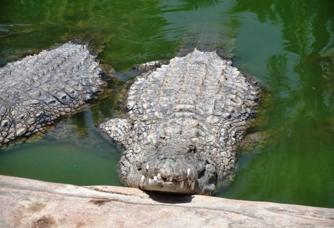 Крокодилий рай острова Джарба 5