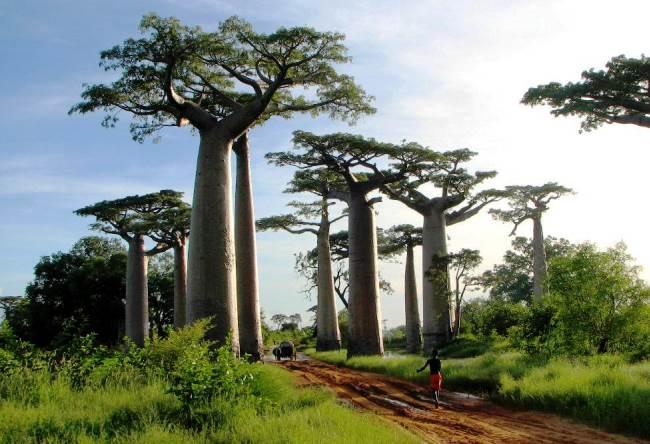 Сказочный остров Мадагаскар 2
