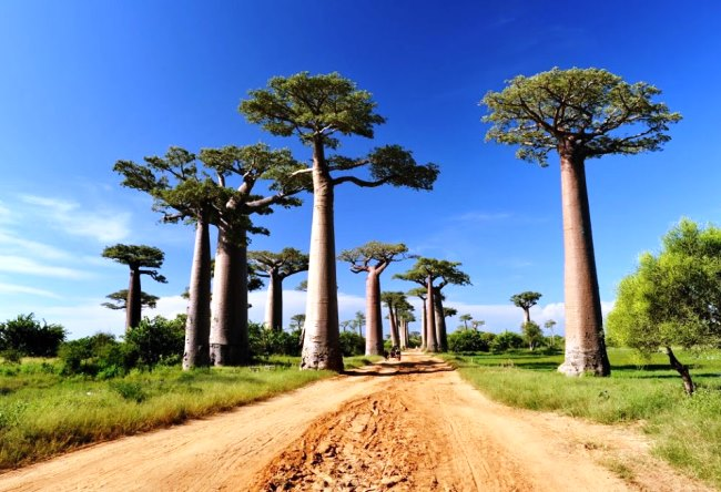 Сказочный остров Мадагаскар 3
