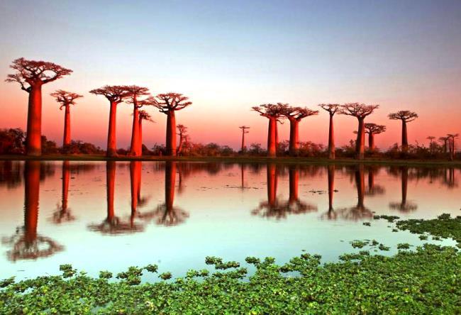 Сказочный остров Мадагаскар 5