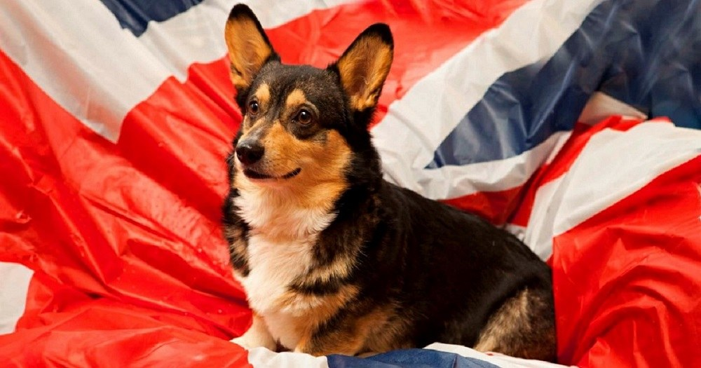 Закон о королевских собаках