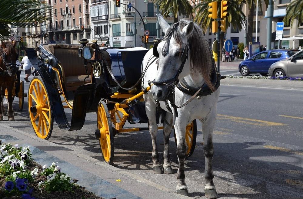 Барселона закрыла конные перевозки