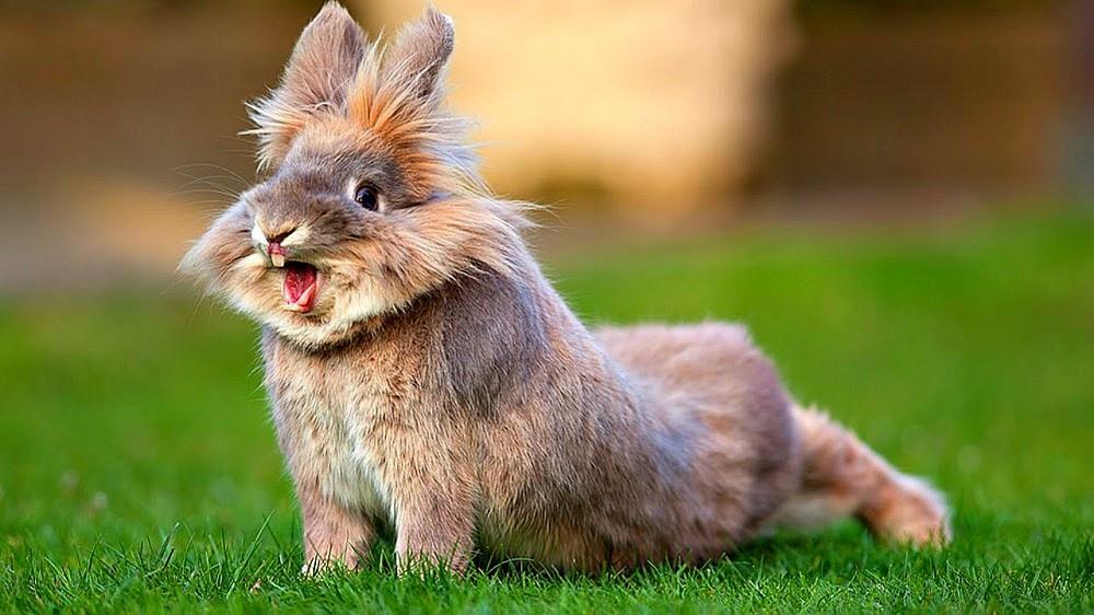 Фотография кролика тоже может стать победителем