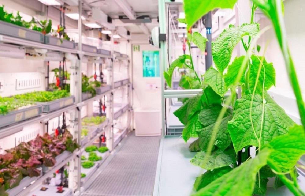 Немцы вырастили первые овощи на Антарктиде