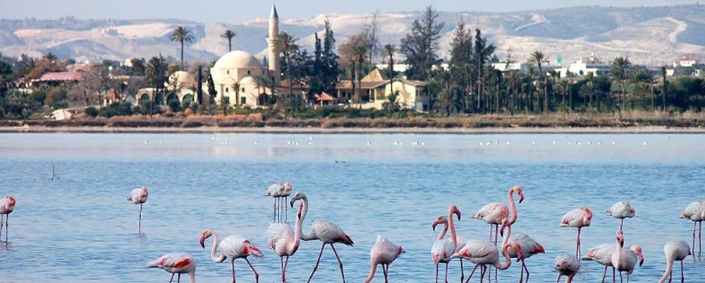 Новый год за границей на Кипре